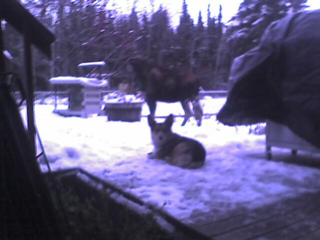 2006.10.22 Toby dog and Moose/Photo_121206_001.jpg